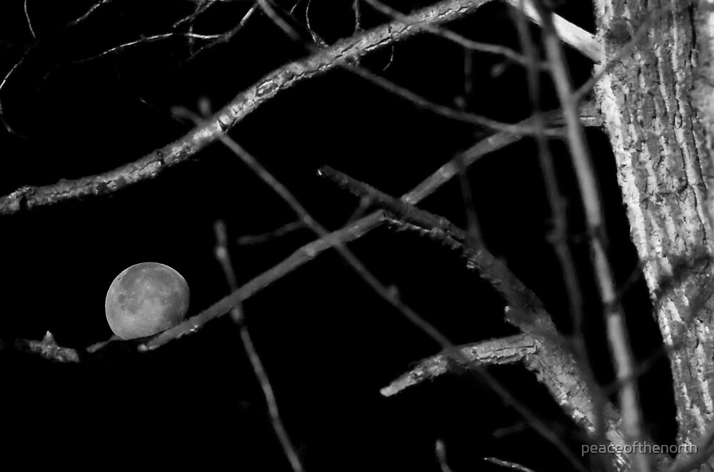 Out on a Limb(red filter) by peaceofthenorth