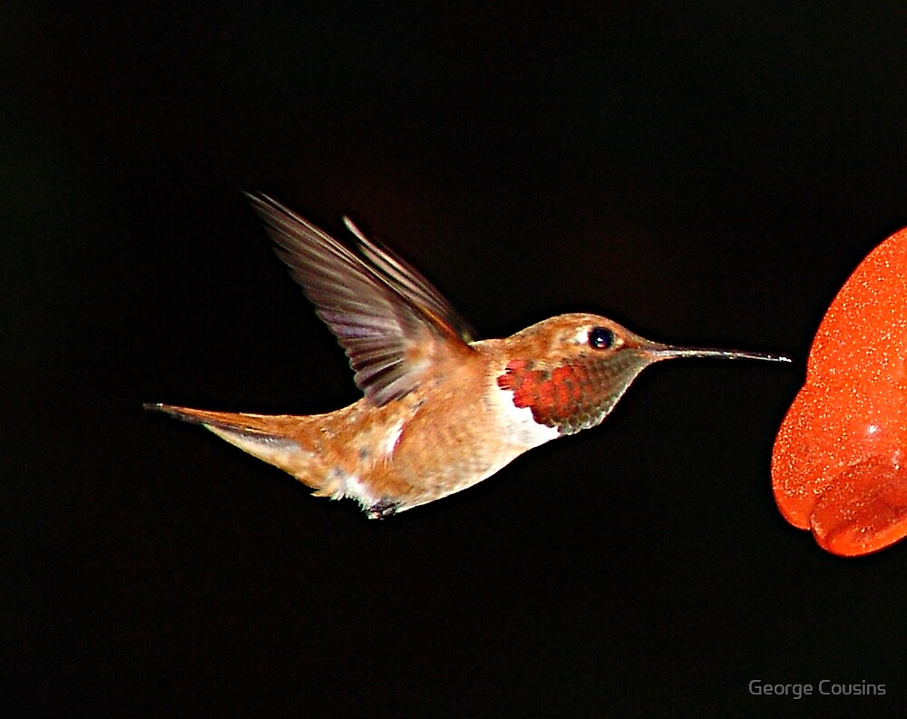 Hummer in Summer by George Cousins