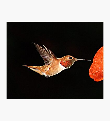 Hummer in Summer Photographic Print