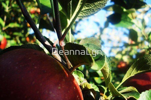 Apples by DeannaLyn
