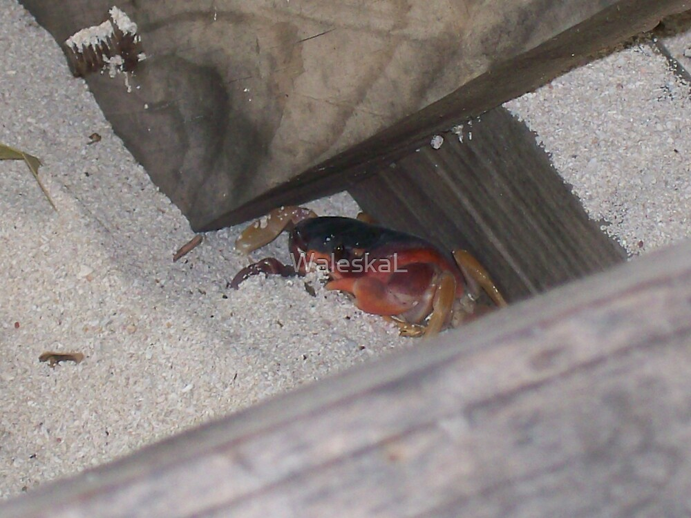 This Crab is so cute! by WaleskaL