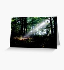 Rays In The Forest Greeting Card