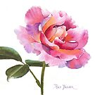 Rose Watercolor by Pat Yager