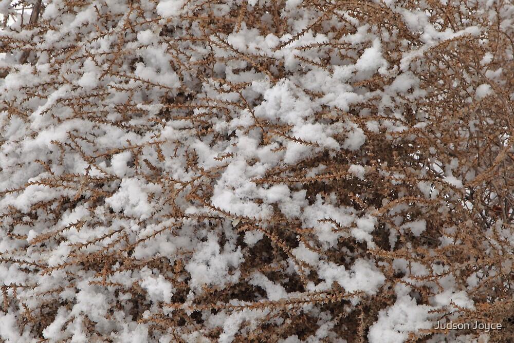 Winter Tumbleweed by Judson Joyce