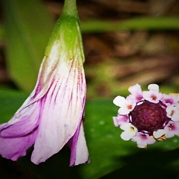 Purple wildflowers by rbb2676