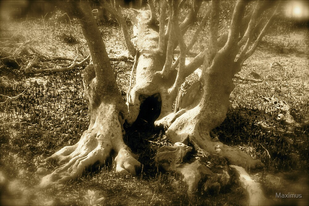 Mangrove Roots by Maximus