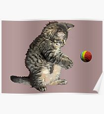 kitty cat playing ball Poster