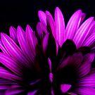 Purple #3 by George Kypreos