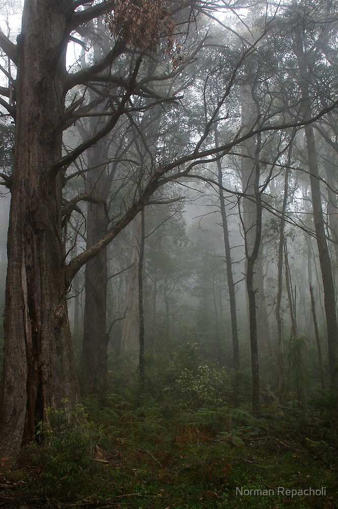 Into the fog by Norman Repacholi