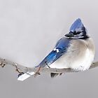 Winter Birds - Blue Jay by Kathy Weaver