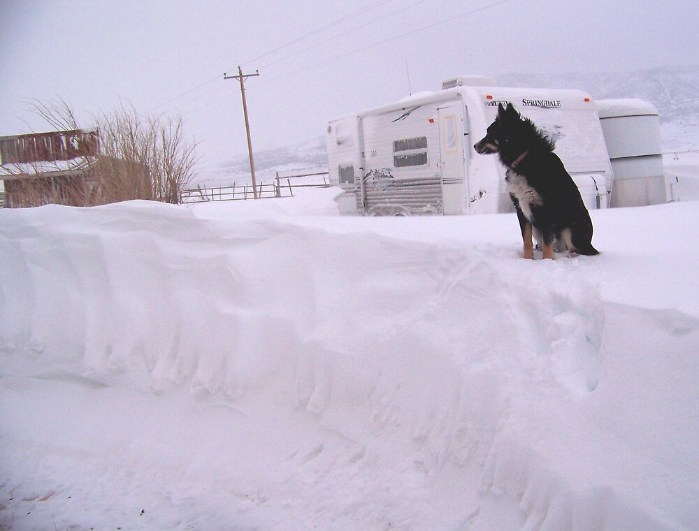 well here in Idaho we got many feet of snow in the last two days by conilouz