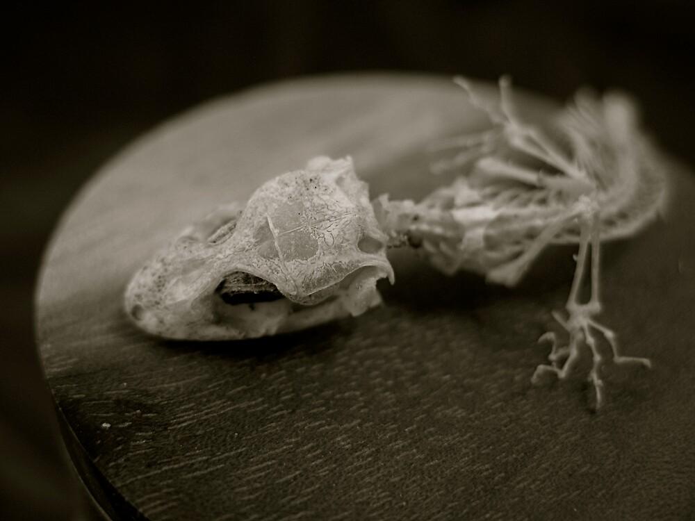 gekko skeleton by dewberry1964