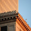 Pigeons Paradise by CjbPhotography