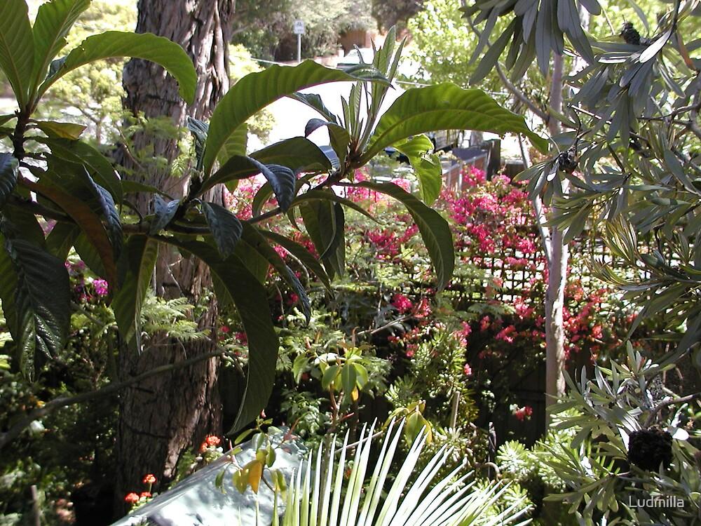 A garden corner by Ludmilla