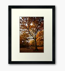 The beauty of Burnham Beeches Framed Print