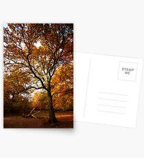 The beauty of Burnham Beeches Postcards