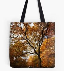 The beauty of Burnham Beeches Tote Bag