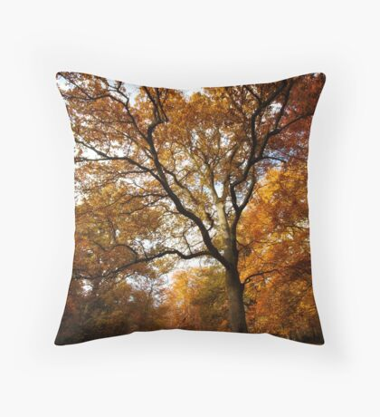 The beauty of Burnham Beeches Throw Pillow