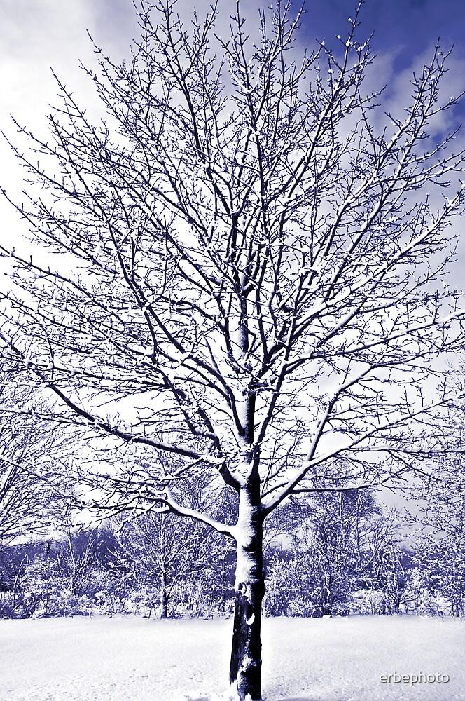 Winter by erbephoto