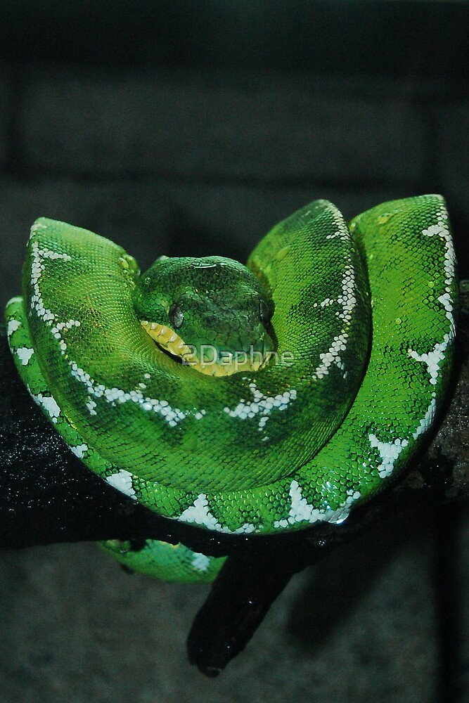 Emerald Tree Boa by 2Daphne