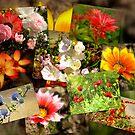Garden by karenlynda