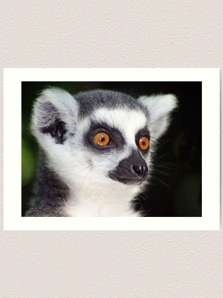 Alternate view of Ring-tailed Lemur Portrait 2 Art Print