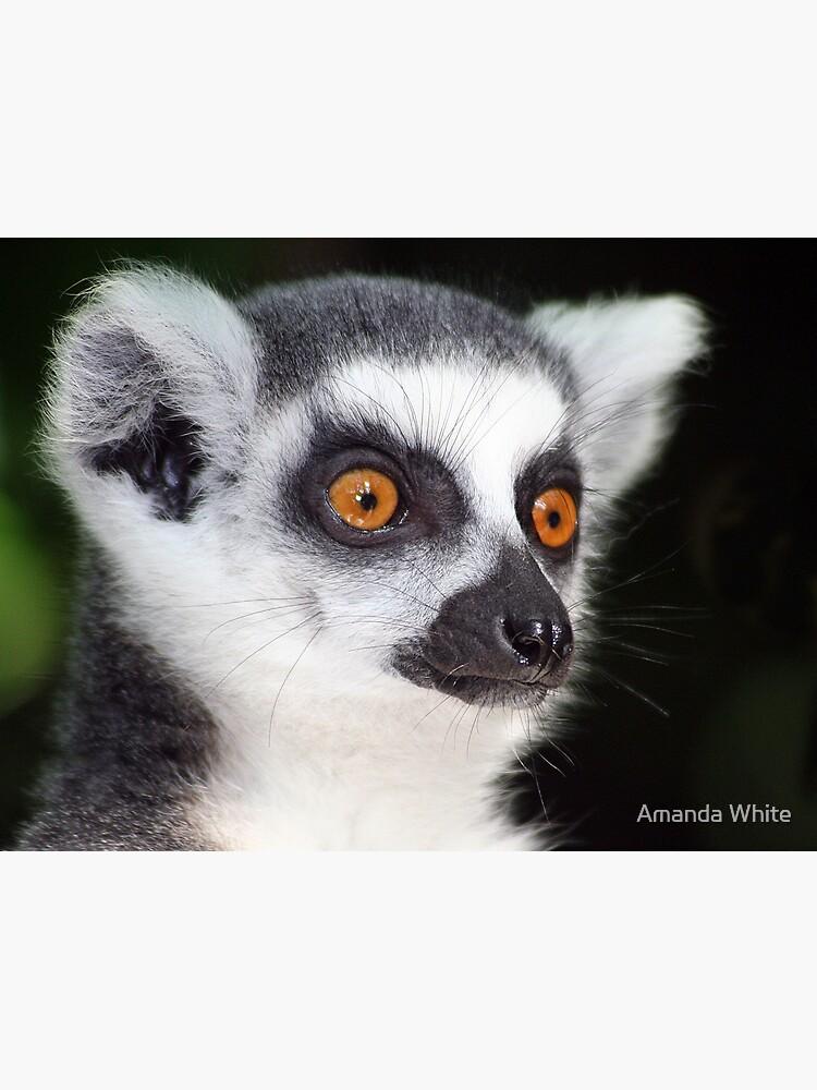 Ring-tailed Lemur Portrait 2 by AJ500