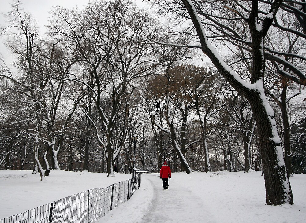 Central Park in Winter by noelani