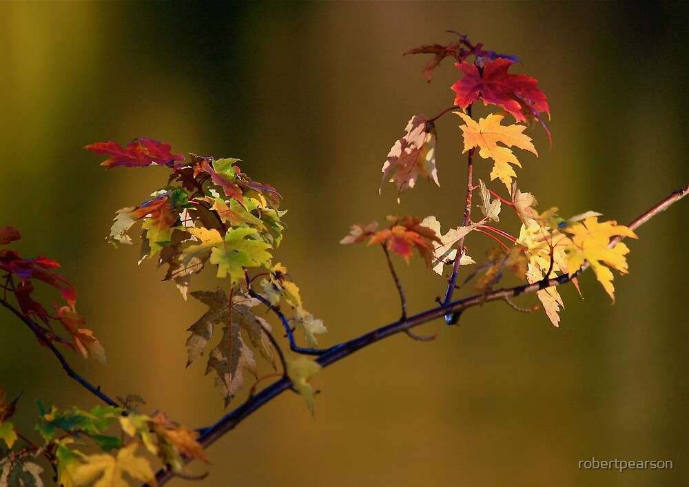 FALL COLORS ON A STICK by robertpearson