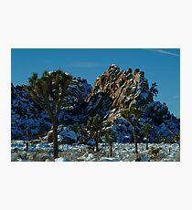 Joshua Wonderland Photographic Print