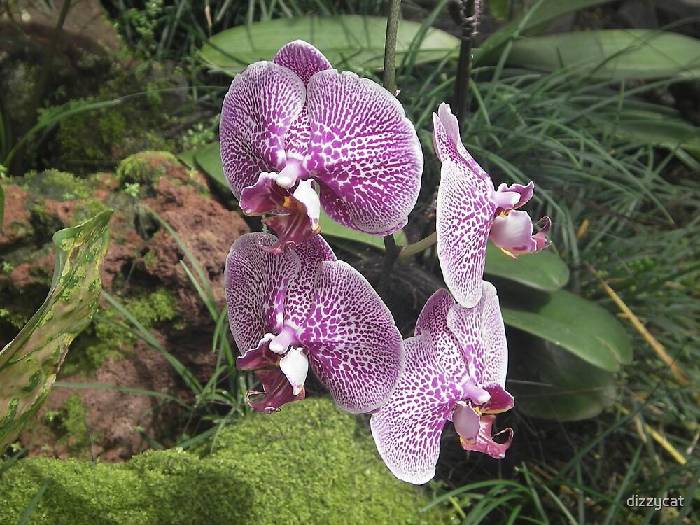 Orchid by dizzycat