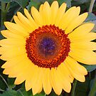 My Sunflower Garden by Amber Elizabeth Fromm Donais