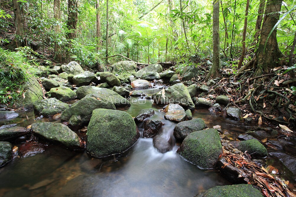 Daintree Rainforest by Andrew Willesee