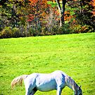 White Horse by terrebo
