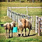 Two Horse by terrebo