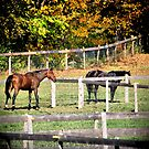 Brown and black Horse In Field by terrebo