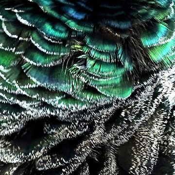 Peahen feather print deep green by chihuahuashower