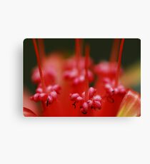 Insect Bar Canvas Print