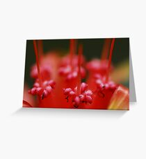 Insect Bar Greeting Card