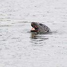 Feeding Seal by David Friederich