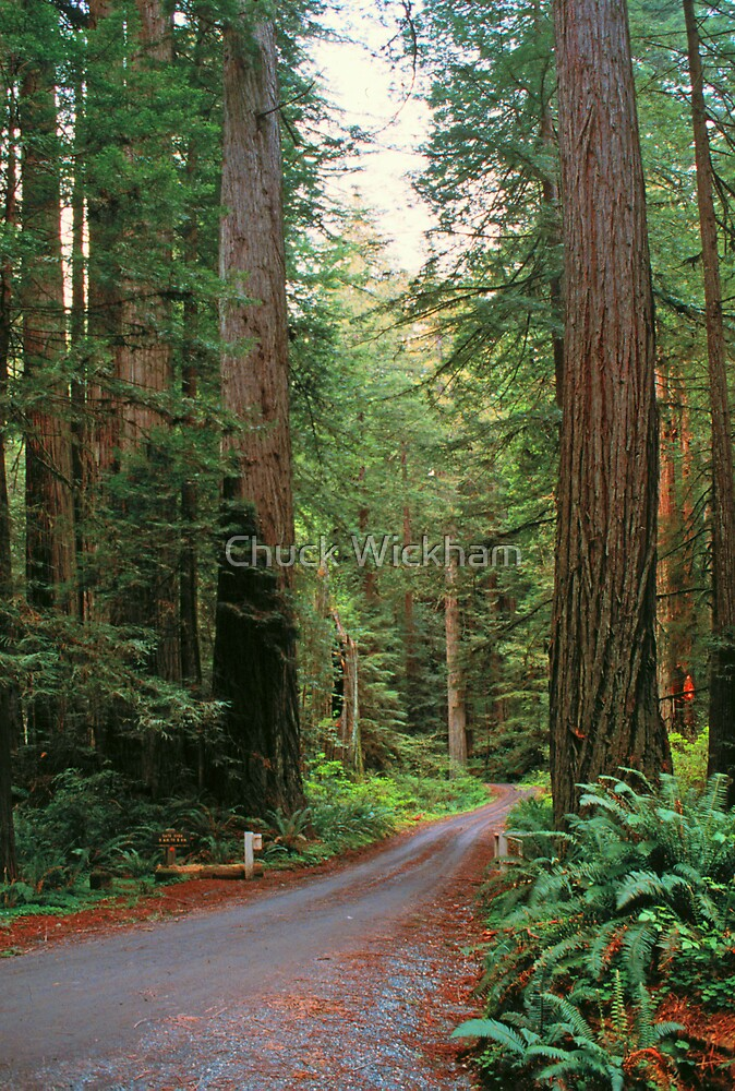 REDWOODS by Chuck Wickham