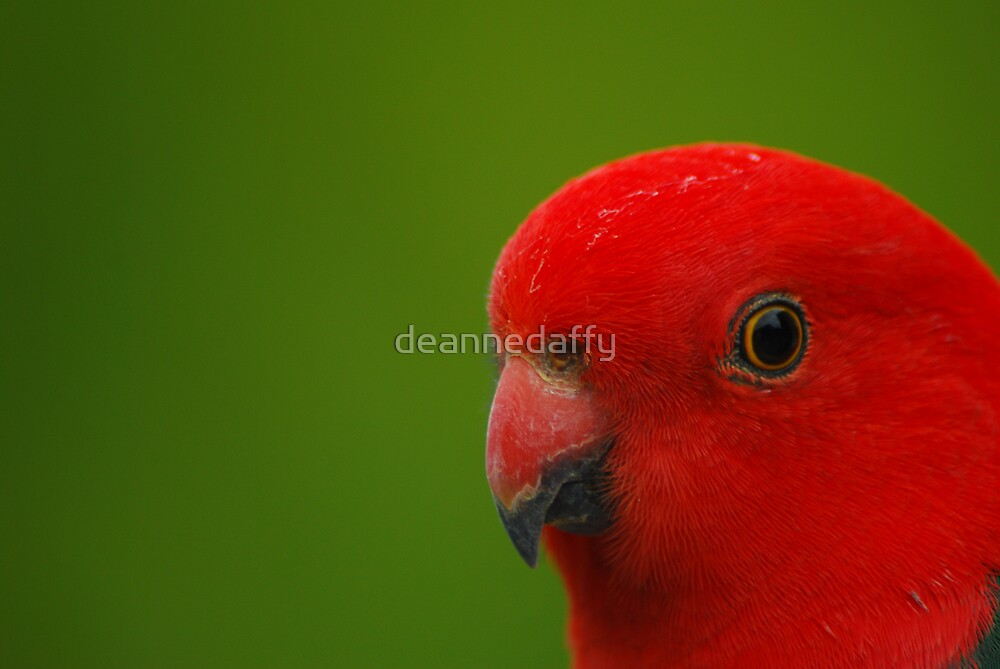 Red and Green by deannedaffy