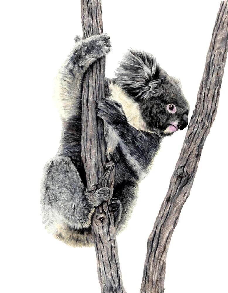 Bear Trees by Judy Ferguson