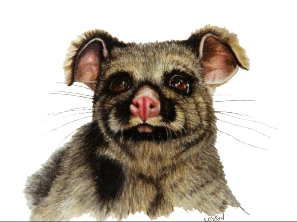 Brushtail Possum by Judy Ferguson