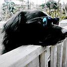 Wonder Dog  by MissIronMax