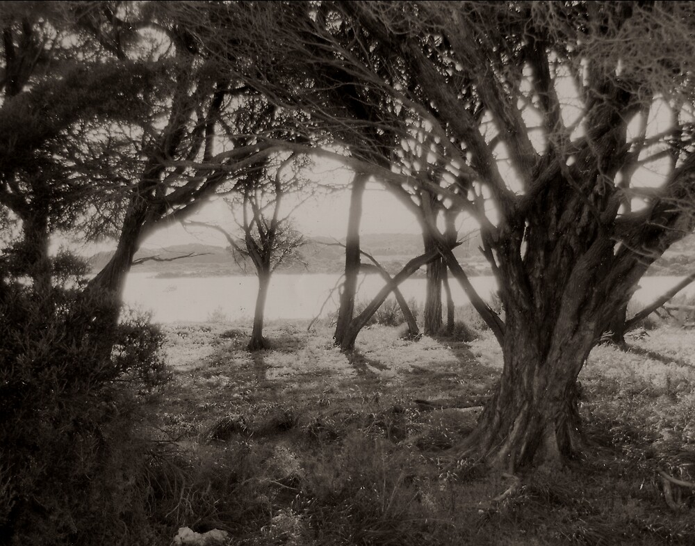 Ti trees Rottnest two by Andrew  Makowiecki