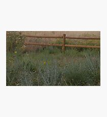 Meadow Fence Photographic Print