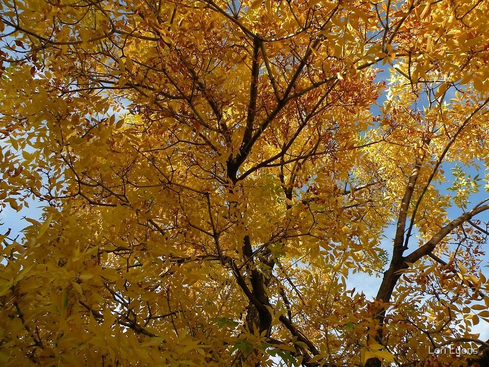 Fall Color by Lori Lyons