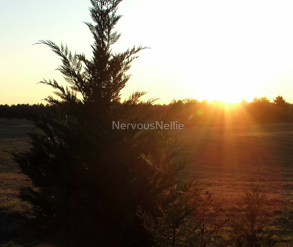 Tree & Sun by NervousNellie