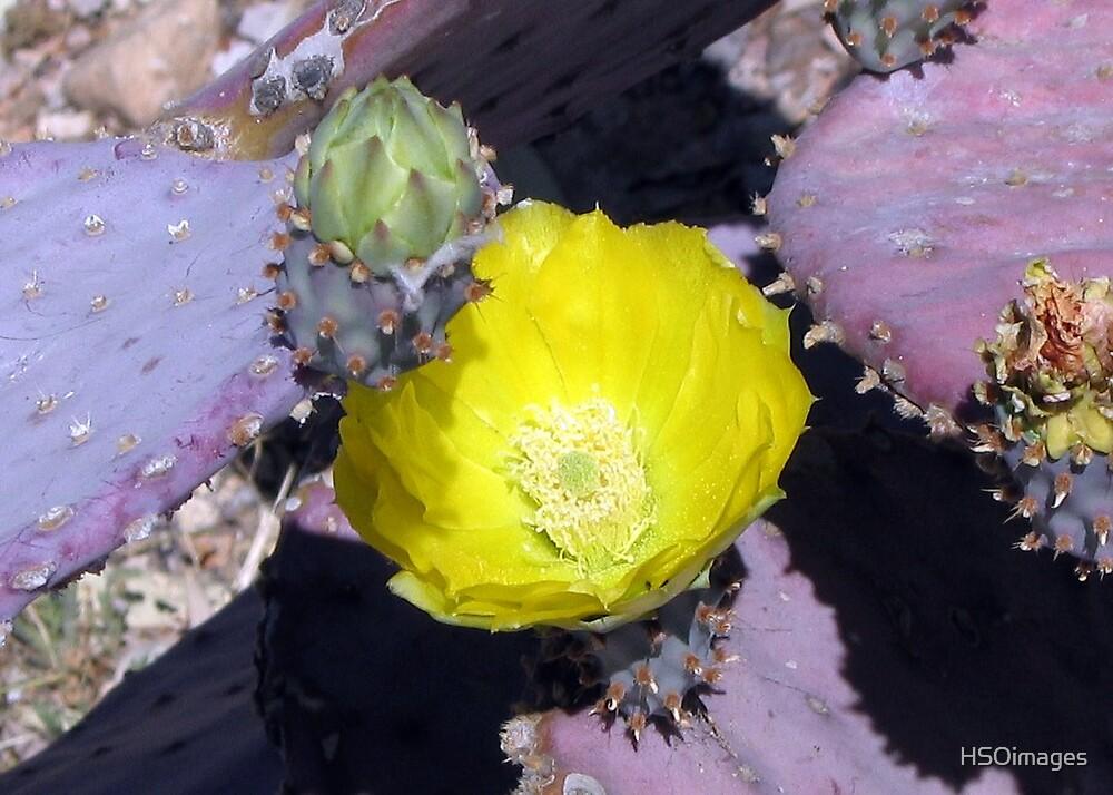 Desert Flower by HSOimages